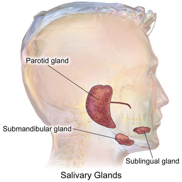 Cellphones, Salivary Glands, & Cancer