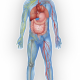 Cancer, the Oral Microbiome, & the Tooth-Body Connection