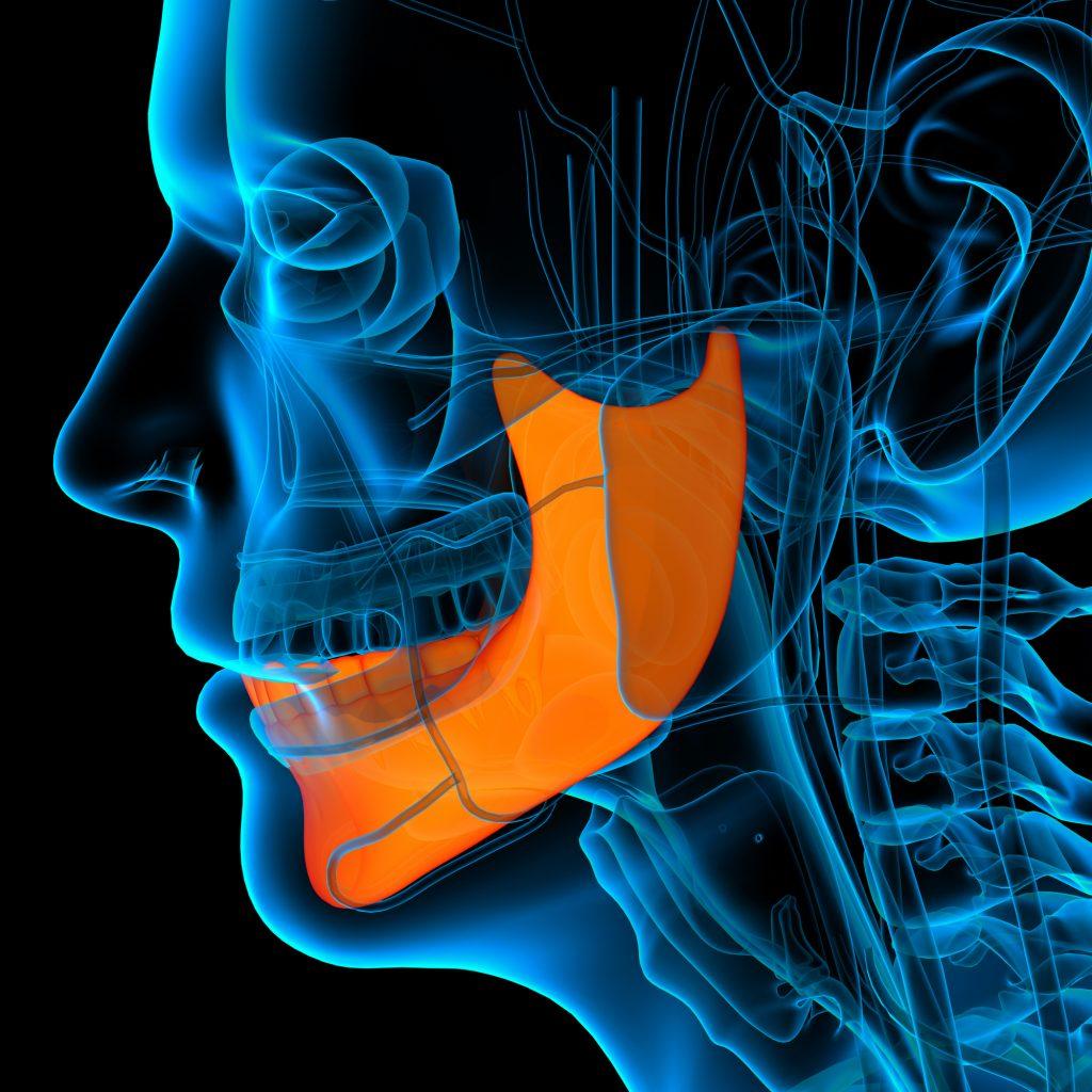 human jawbone