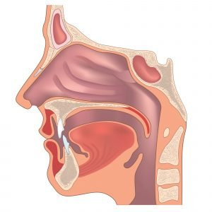 diagram of nose mouth and throat