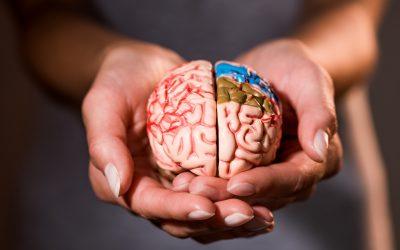 Fluoride & the Developing Brain